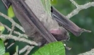 Bat at Bracken Cave   John Tedesco